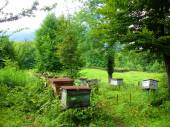 Apiary in a forest in the mountains — ストック写真