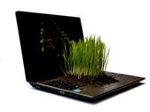 Clump of green grass on a computer — Stock Photo