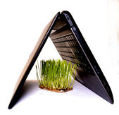 Turf grass and computer — Foto de Stock