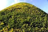 Green grass and sky — Stockfoto