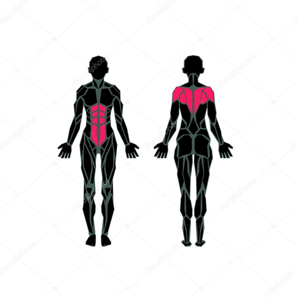 anatomy of female muscular system, exercise and muscle guide, Muscles
