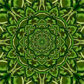 Green Kaleidoscope Flower — Stock Photo