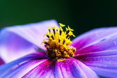 Macro of the flower — Stock Photo