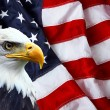 North American Bald Eagle on American flag — Stock Photo #62407167