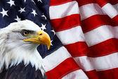 North American Bald Eagle on American flag — Stock Photo
