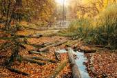 Consequences of deforestation around river in Autumn color — Stock Photo