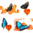 Collage of blue butterfly on red candy and orange petals — Stock Photo #61204531