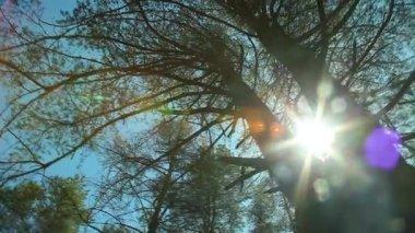 Sun Glimmering — Stock Video