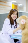 Young veterinarian with the cute dog — Stock Photo