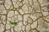 Plant with dry background — Stock Photo