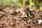 Butterfly on the ground — Stock Photo