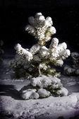 在雪中的树 — 图库照片