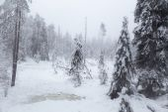 Frozen swamp — Photo