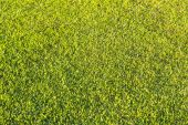 Mowed grassland, lawn in sunset light — Stock Photo