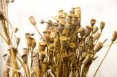 Dried herbs, tansy, yarrow, wormwood, poppy, ear — Stock Photo