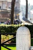 Seagull on the column — Stock Photo