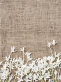 White Flower frame design, Nature background — Stock Photo