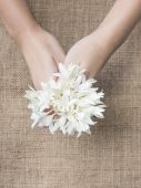 Woman's hands with white flowers, Natural concept. — Stock Photo