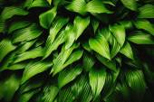 Green leaves dynamic background — Stock Photo