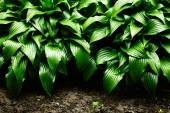 Green leaves dynamic background — Stockfoto