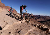 Russian MTB bikers going downhill in the desert from mt. Sinai. — Stock Photo