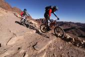 MTB bikers going downhill in the desert from mt. Sinai. — Stock Photo