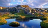 Severní letní krajina — Stock fotografie