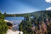 Lake at mountain top — Stock Photo