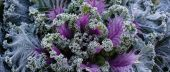 Decorative garden cabbage covered with hoarfrost — Stock Photo