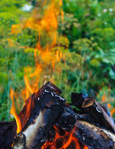 Flame of a burning fire — Stock Photo