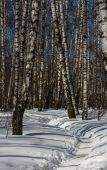Footpath trodden in snow  — Stock Photo