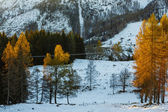 Yellow larches illuminated by the morning sun — Stock Photo