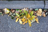 A bunch of oak leaves and acorns near the curb on the road — Stock Photo