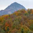 Autumn forest and mountain views in Rosa Khutor, Sochi, Russia — Stock Photo #64642797