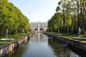 "ST. PETERSBURG, RUSSIA - MAY 26: The Peterhof fountain ""Samson t — Stock Photo"
