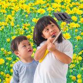 Field of Dahlberg daisy in the garden — Stock Photo