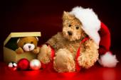 Teddy Bear Wearing a Christmas Hat and a Toy Bear Peeking Out of — Stock Photo