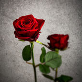Single red rose against a textured background — Stock Photo