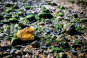 Lonely Orange Rock In A Sea Of Green — Stockfoto