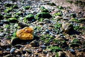 Lonely Orange Rock In A Sea Of Green — Stock Photo