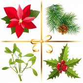 Christmas plants — Stock Vector