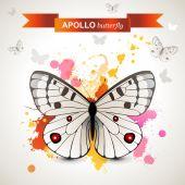 Apollo butterfly — Stock Vector