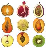 Fruits set — Stock Vector