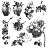 Hand dawn berries — Stock Vector