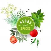 Herbs and spices — Stock Vector