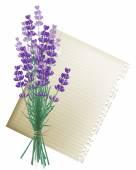 Lavender bunch — Stock Vector