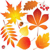 New autumn leaves collection — Vector de stock