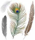 Feathers — Vector de stock