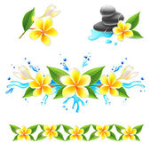 Frangipani flowers — Stock Vector
