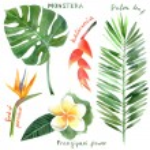 Watercolor tropical plants — Stock Vector #60052239